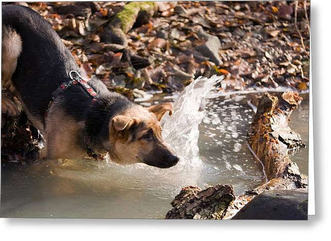 Dog In River Greeting Card