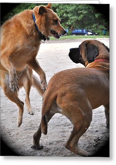 Dog Jumping Greeting Card by Stephen  Tunis
