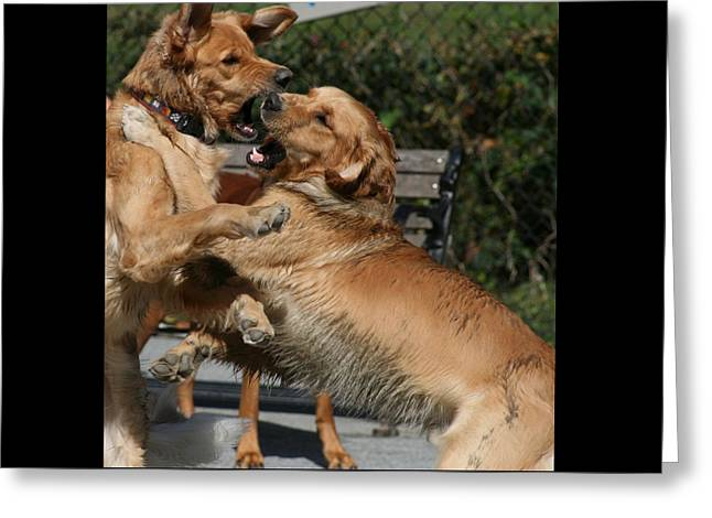 Dog Playground Greeting Card by Valia Bradshaw