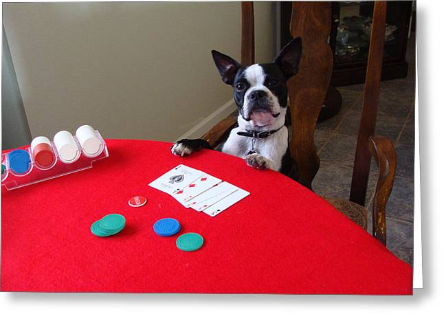 Dog Playing Poker Greeting Card by Spike Burrows