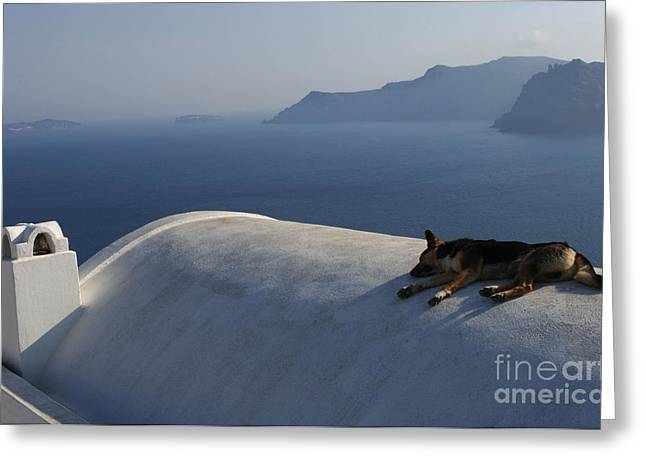 Dog Tired In Santorini Greeting Card by Bob Christopher