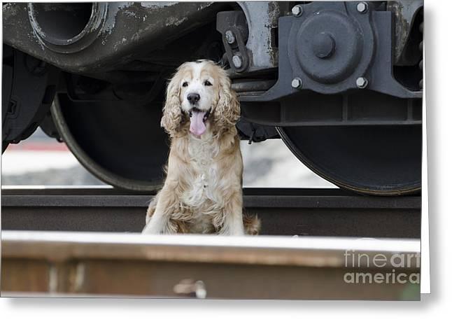 Dog Under A Train Wagon Greeting Card by Mats Silvan