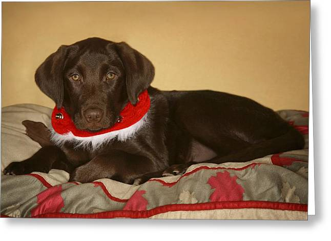 Dog With Christmas Collar Greeting Card by Leah Hammond