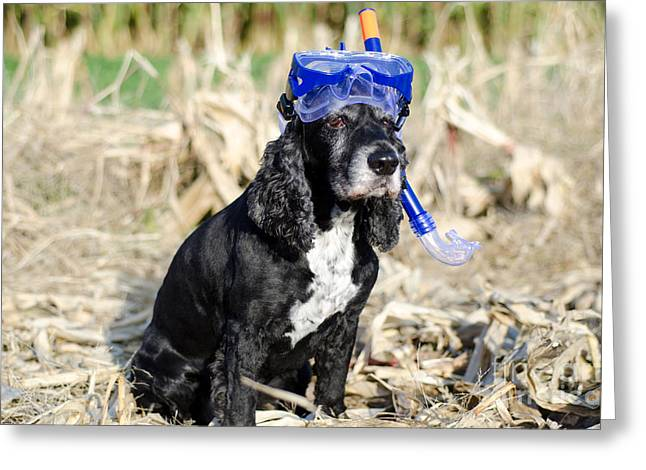 Dog With Diving Mask Greeting Card