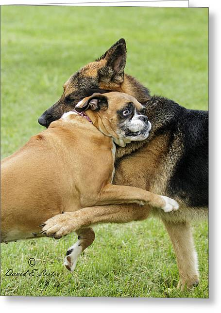 Doggie Love Greeting Card by David Lester
