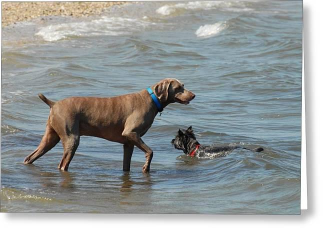 Dogs 21 Greeting Card by Joyce StJames