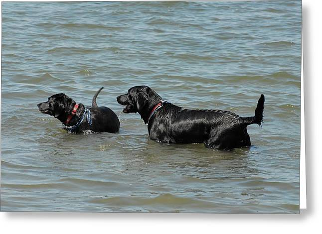 Dogs 62 Greeting Card by Joyce StJames