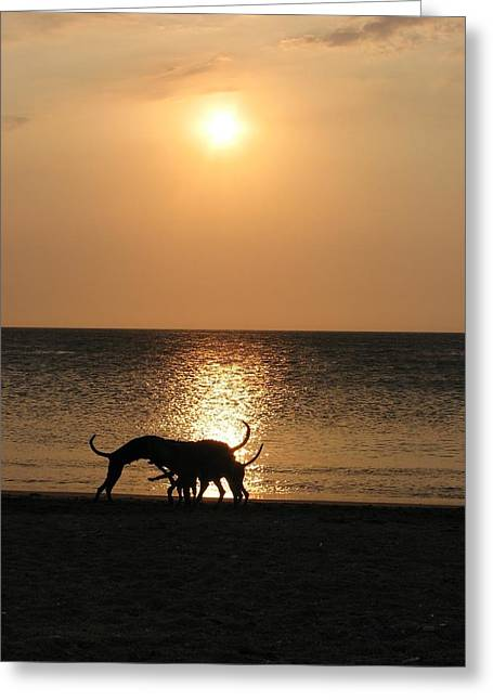Dogs At Sunset Greeting Card by Gal Moran