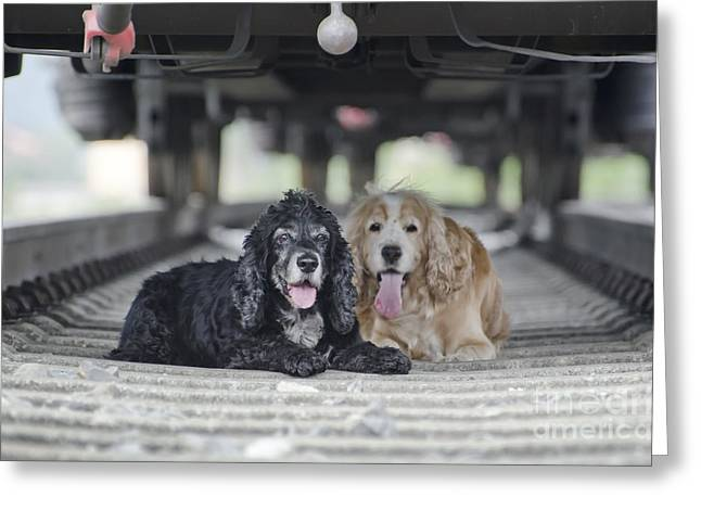 Dogs Lying Under A Train Wagon Greeting Card by Mats Silvan