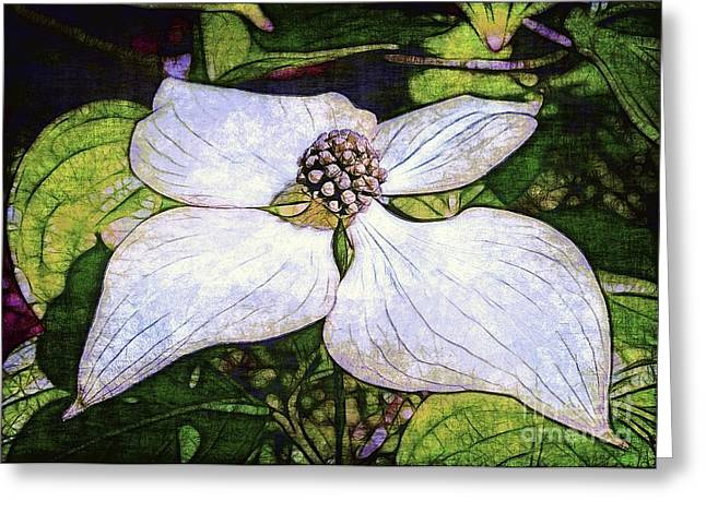Dogwood Days Greeting Card by Judi Bagwell