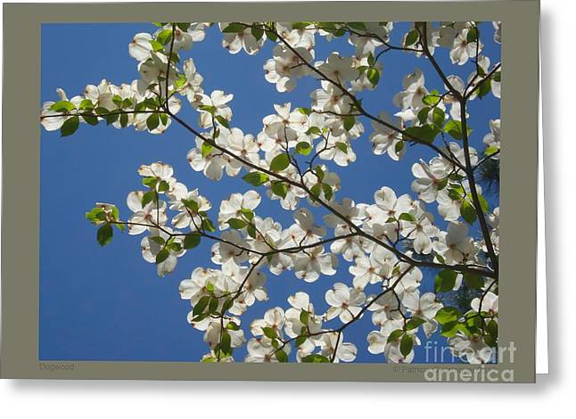 Dogwood Greeting Card by Patricia Overmoyer