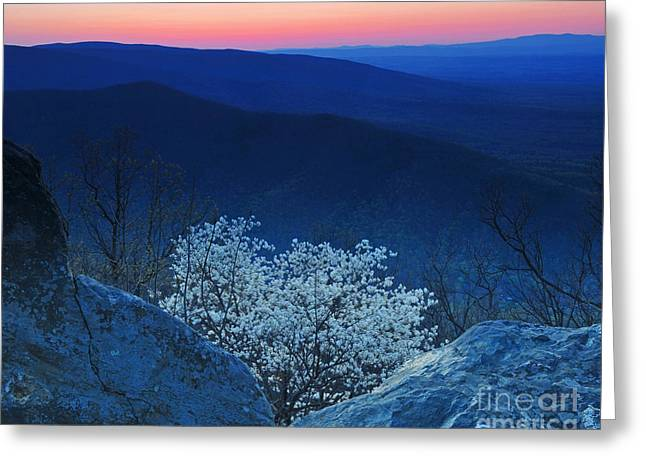 Dogwood Spring Sunset Blue Ridge Parkway Greeting Card