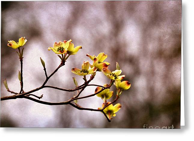 Greeting Card featuring the photograph Dogwood by Tamera James