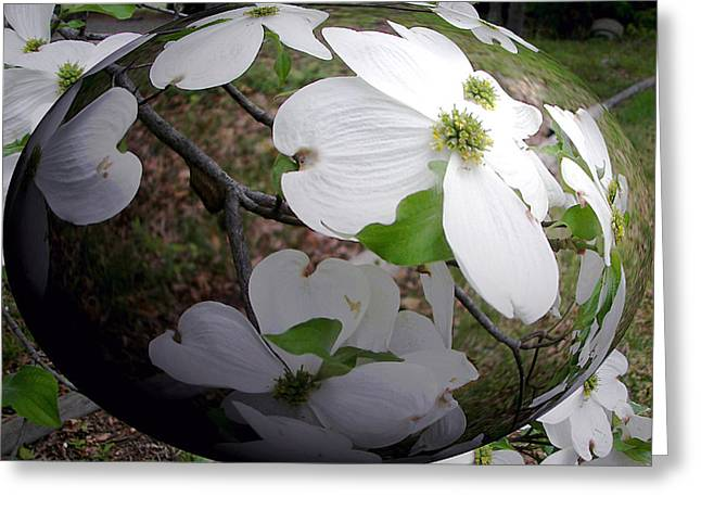 Dogwood Under Glass Greeting Card