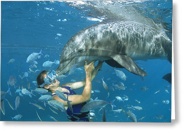 Dolphin And Swimmer Greeting Card by Alexis Rosenfeld