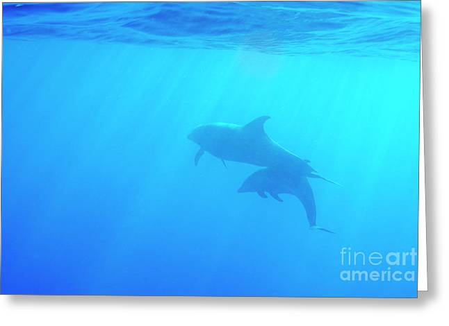 Dolphin Mother And Calf Greeting Card by Sami Sarkis