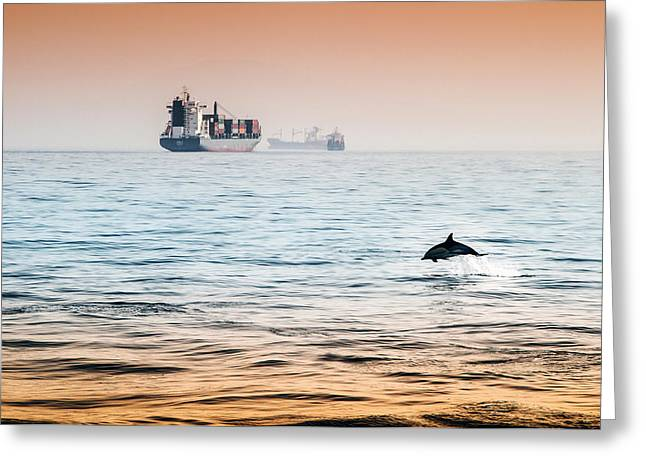 Dolphing Playing In The Sunset Greeting Card by Stephen McCluskey