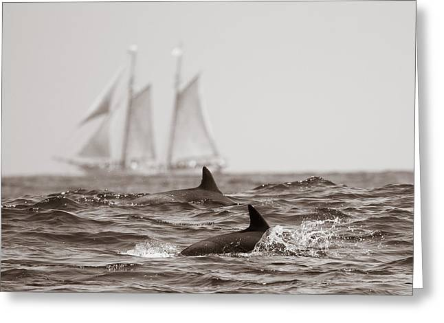 Dolphins With Ship Greeting Card by Will Edwards