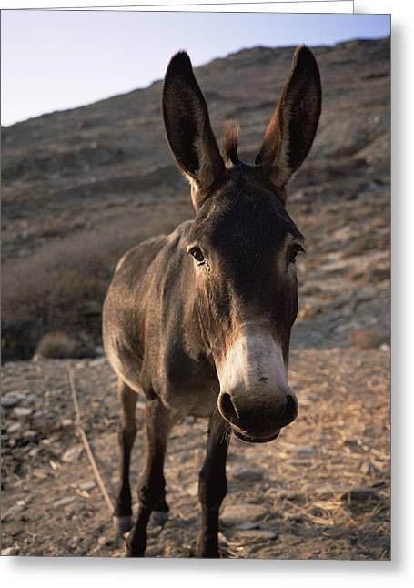 Donkey Greeting Card by Bjorn Svensson