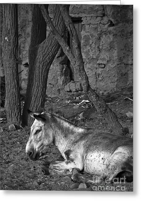 Donkey Smile Greeting Card by Nabucodonosor Perez