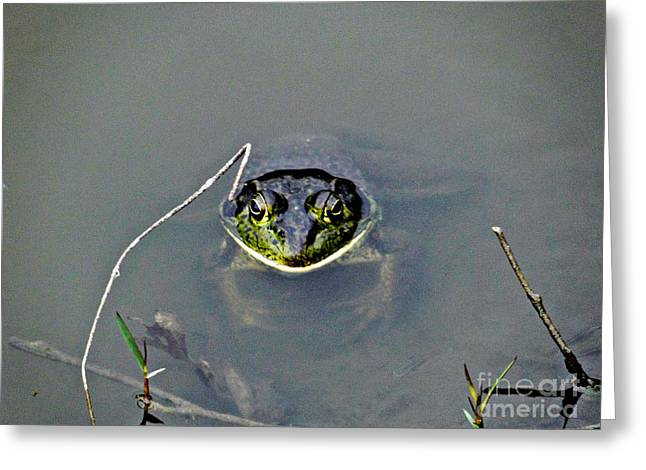 Dont Croak On Me Now Greeting Card by Al Bourassa