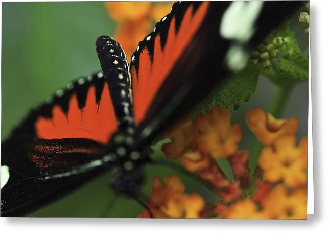 Doris Longwind Red Version Greeting Card