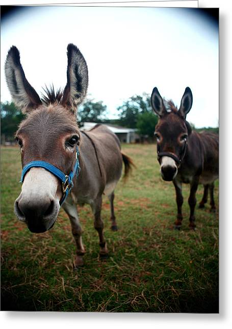 Doting Donkeys Greeting Card by Lon Casler Bixby