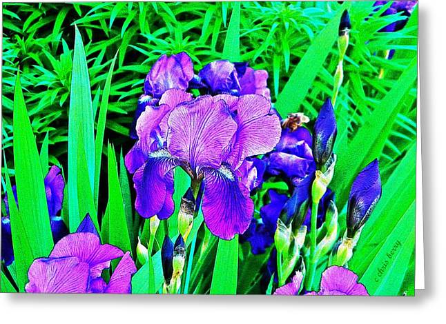 Double Blooming Iris Greeting Card