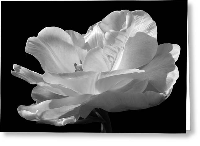 Greeting Card featuring the photograph Double Late Angelique Tulip by Darleen Stry