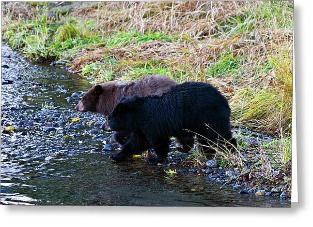 Double Trouble Greeting Card by Mike  Dawson