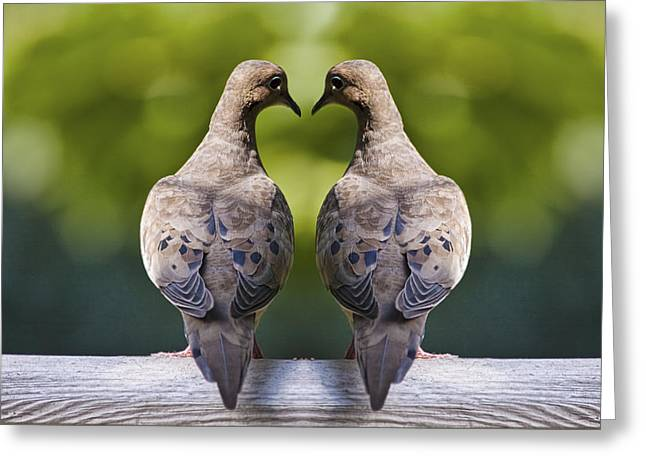 Dove Birds Greeting Card by Randall Nyhof