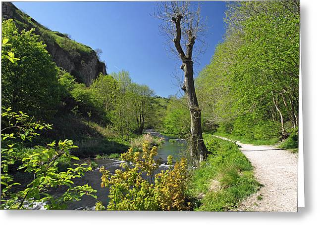 Dove Valley - Beside The River Greeting Card