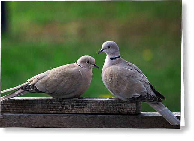Doves Greeting Card