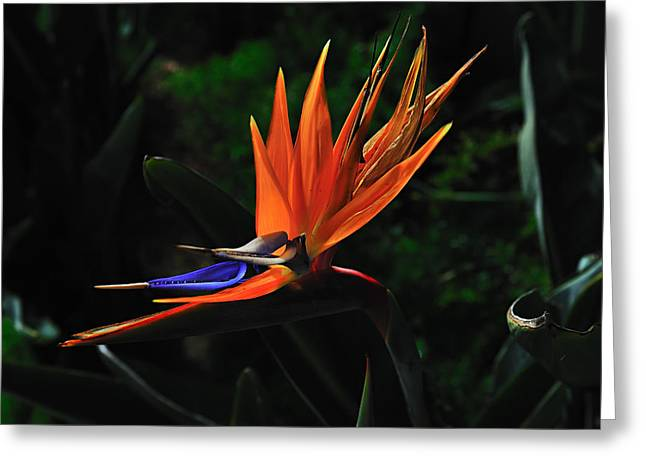 Dragon Flower Greeting Card by Richard Leon