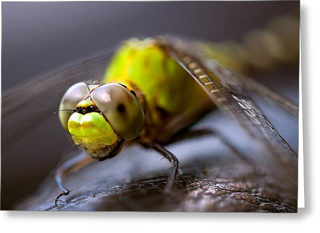Dragon-fly  Greeting Card