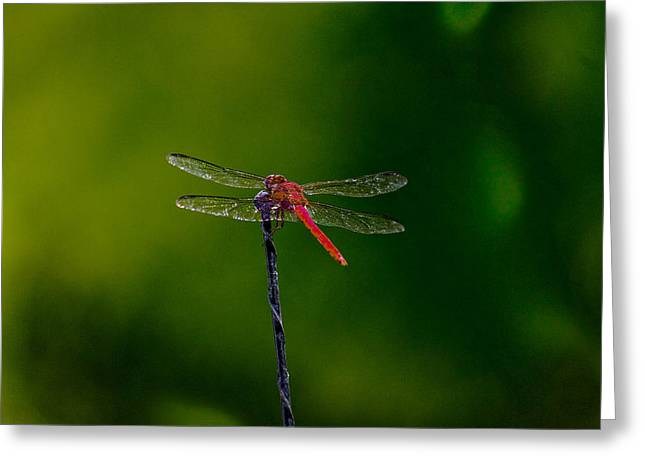Dragon Fly At Rest Greeting Card by David Alexander