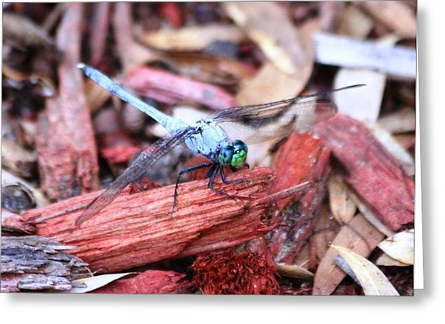 Greeting Card featuring the photograph Dragon Fly by Jeanne Andrews
