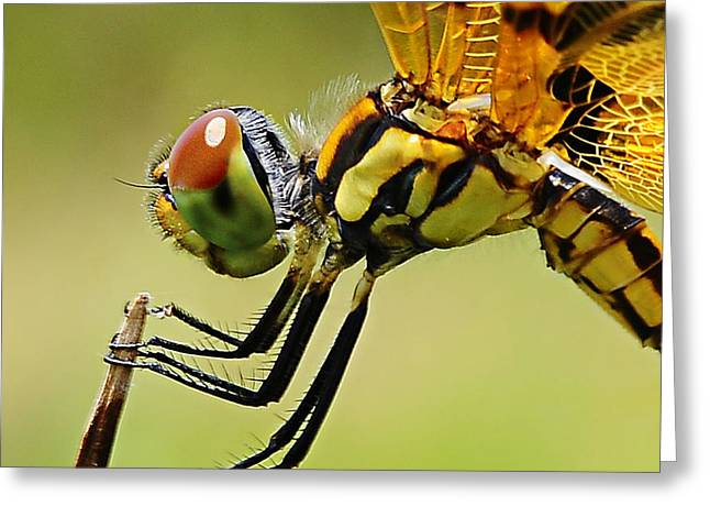 Dragon Fly Greeting Card by Michelle Armstrong
