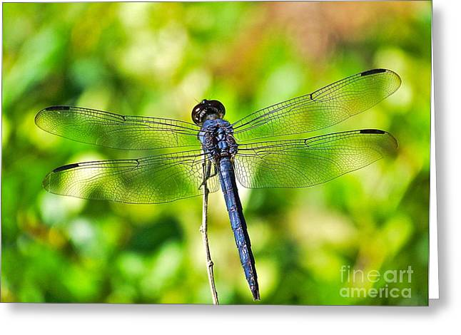 Greeting Card featuring the photograph Dragon Fly Spread by Eve Spring