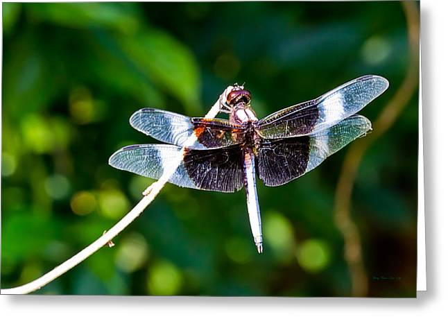 Dragonfly 0002 Greeting Card by Barry Jones