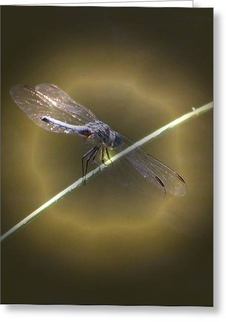 Dragonfly 1 Greeting Card by Judith Szantyr