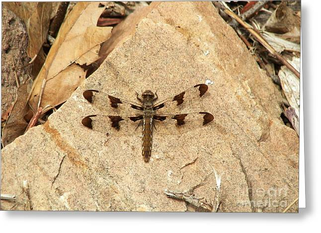 Greeting Card featuring the photograph Dragonfly At Rest by Deniece Platt