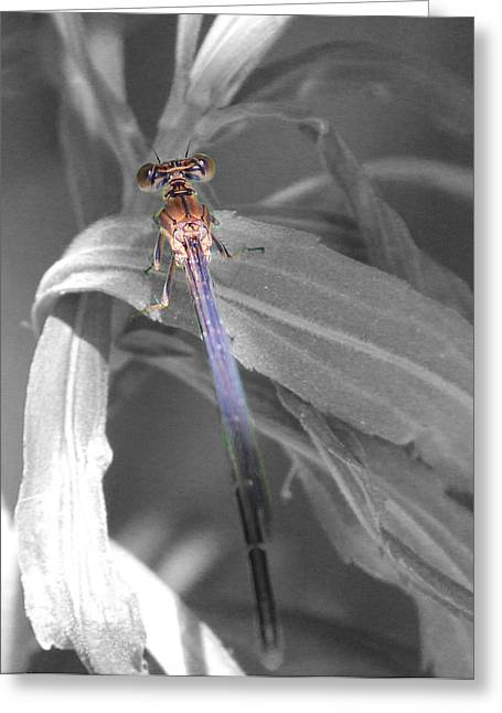 Dragonfly Bw With Color Greeting Card