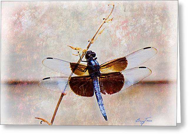 Dragonfly Clinging Greeting Card by Barry Jones