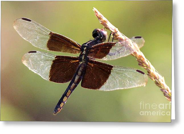 Greeting Card featuring the photograph Dragonfly Closeup by Kathy  White