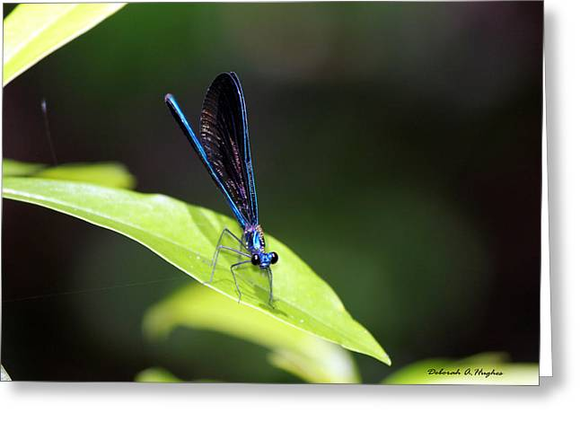 Dragonfly Fly Greeting Card
