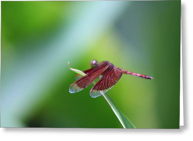 Dragonfly Greeting Card by Gonca Yengin