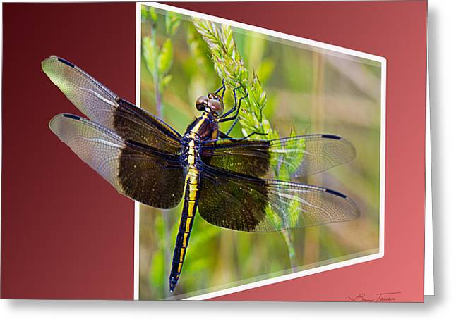 Dragonfly Holding On Greeting Card by Barry Jones
