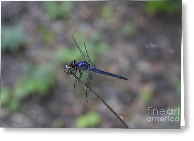 Dragonfly Greeting Card by Jerry Bunger
