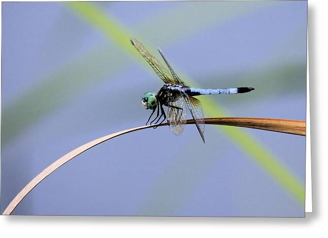Dragonfly Greeting Card by Laura Oakman